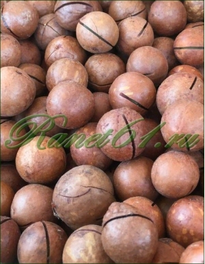 Макадамия орех в скорлупе мелкий АА(4,9кг)