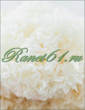 гриб белый древесный китайский ( 1кг)